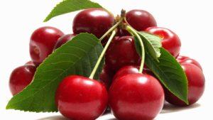 Вишневые заботы садоводов – как защитить вишневое дерево в саду.