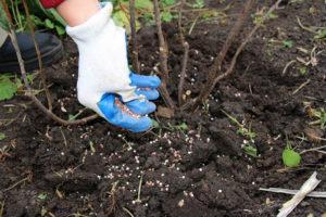 Удобрения для плодовых деревьев: когда и сколько использовать?
