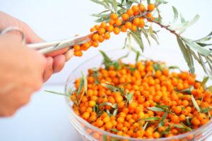 Облепиха – секреты выбора сорта, посадки и ухода