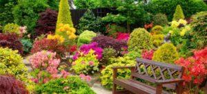Посадка кустарников: как правильно и быстро высадить растения в грунт