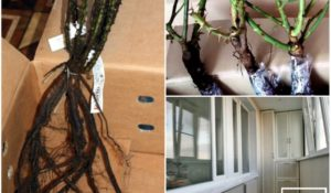 Как сохранить саженцы на балконе - рекомендации и советы