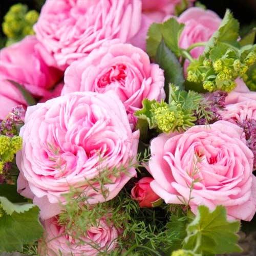 Роза Саммер Романс 1