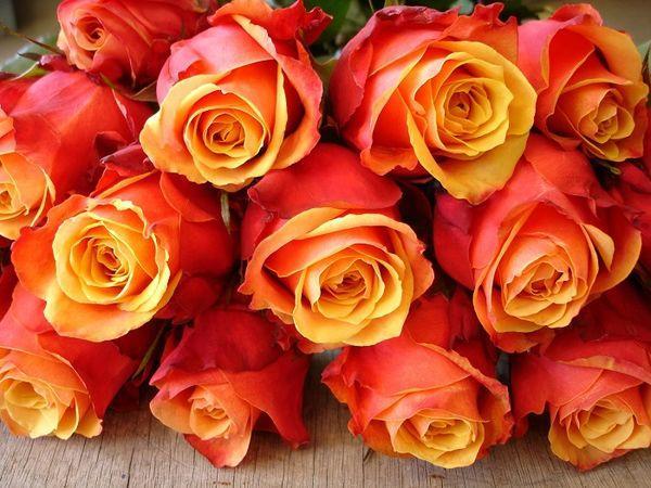 Роза Черри Бренди 3