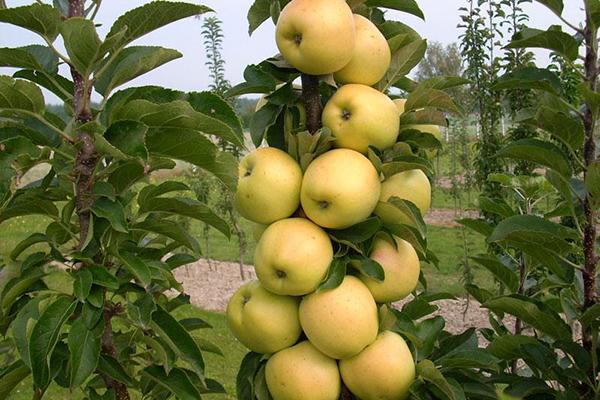 Яблоня Малюха 3