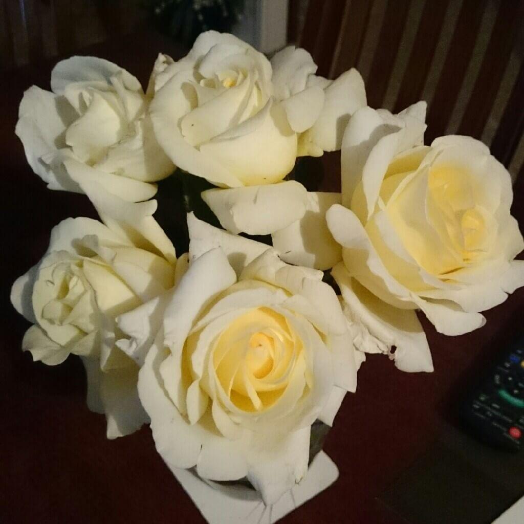 Роза Элина изображение 4