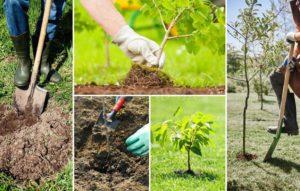 Как вырастить саженец своими руками – подробные этапы, от выбора почвы до посадки