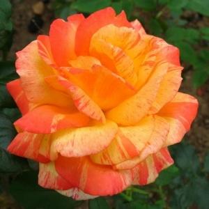 Роза Марвел 2