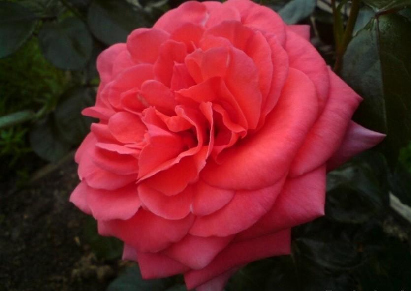 Роза Майнтауэр изображение 3
