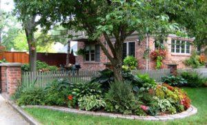 Что посадить под деревьями в саду: советы цветоводов