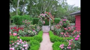 Подготовка роз к зиме – секреты опытных садоводов