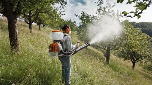 Защита садовых яблонь от болезней и вредителей