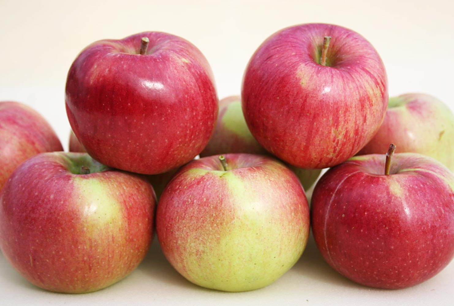 Яблоня Анис полосатый 1