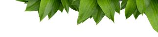 Листья над формой