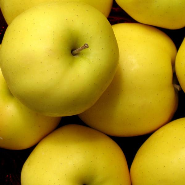 Саженцы яблони Голден Делишес изображение 2
