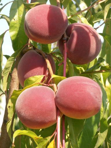 Персик обыкновенный Харроу Даймонд изображение 3