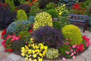 ассортимент декоративных растений