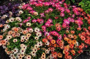 саженцы однолетних цветов