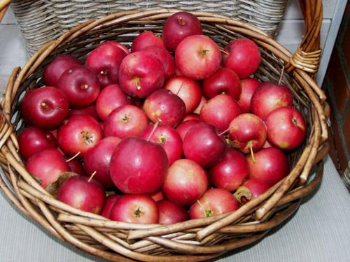 Яблоня китайка Керр изображение 5