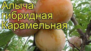 Алыча Карамельная 3