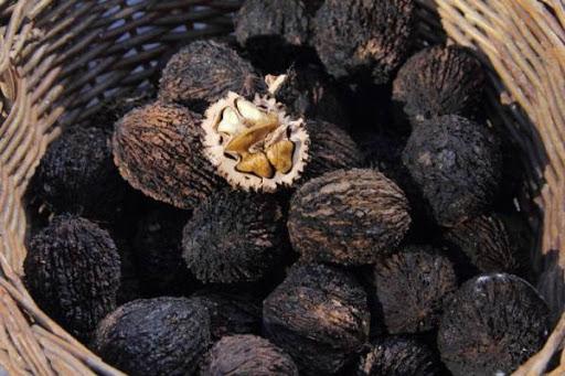 Орех Чёрный изображение 4