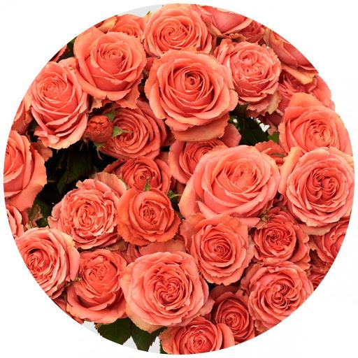Роза Айя София 1