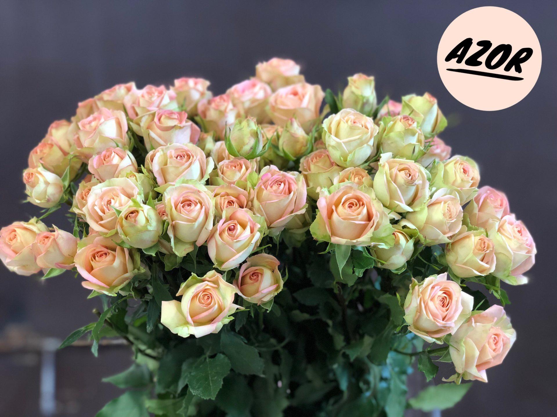 Роза Азор изображение 1