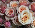 Роза Азор
