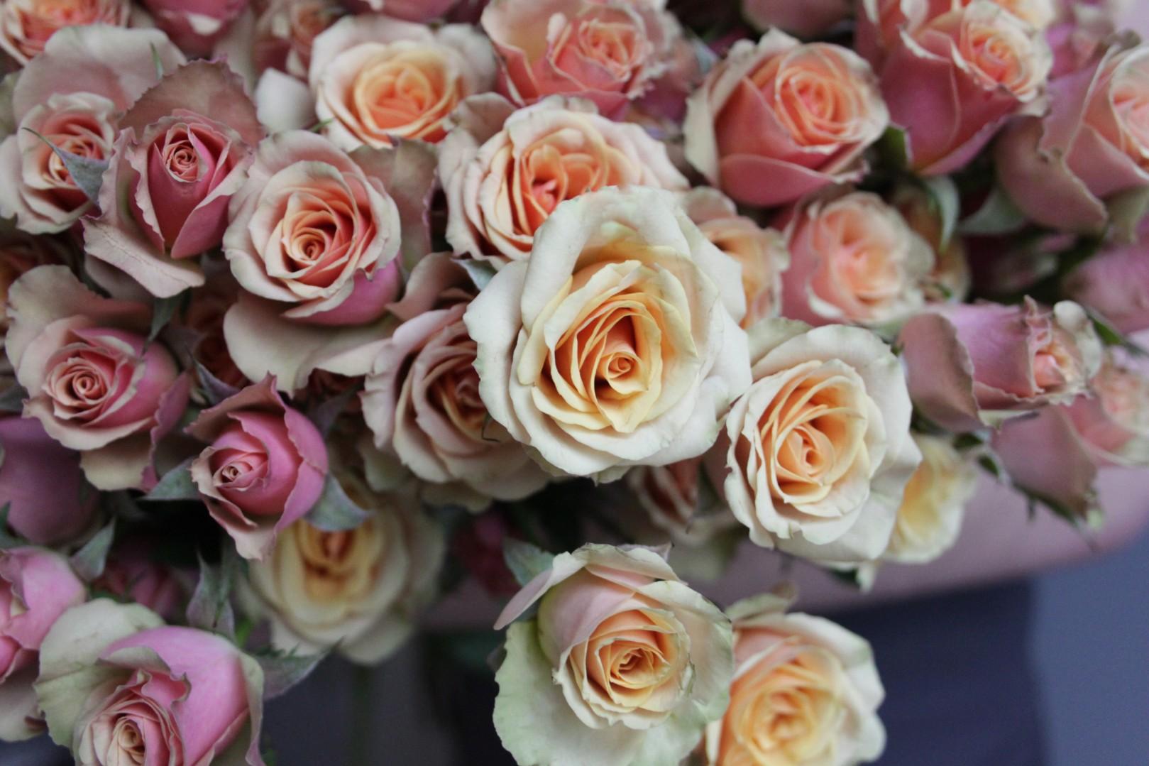 Роза Азор изображение 4