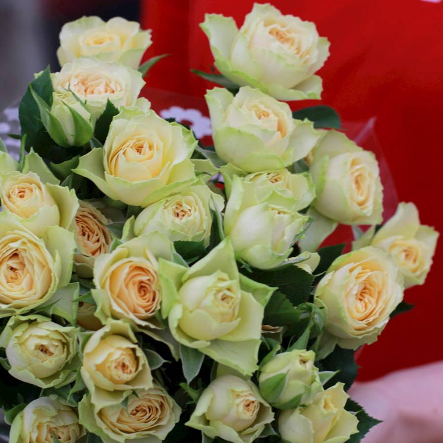 Роза Бандолеро изображение 2