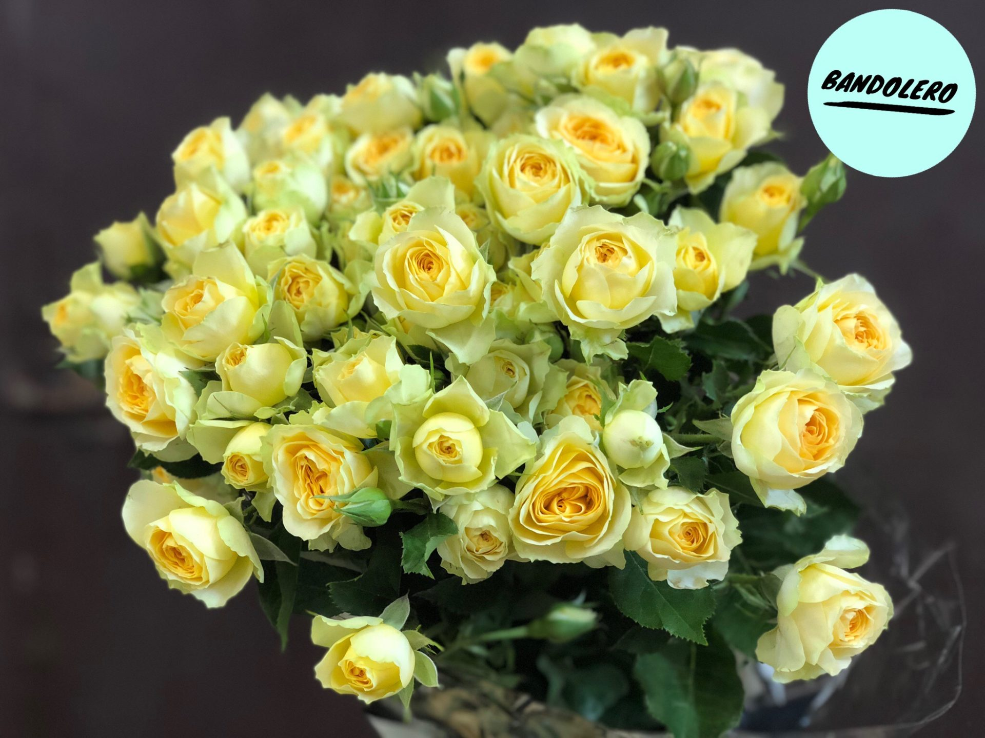 Роза Бандолеро изображение 4