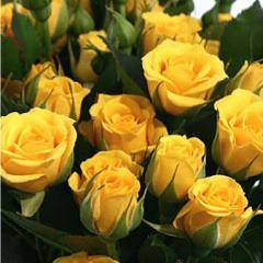 Роза Бэйби Желтая изображение 2