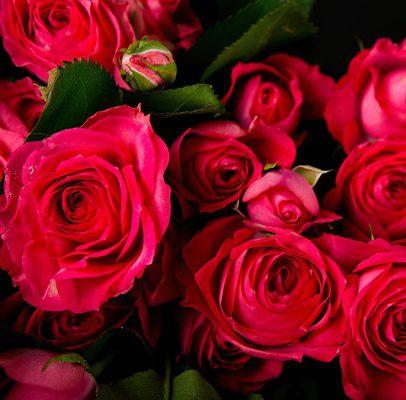 Роза Белла Линда изображение 2