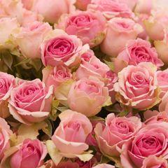 Роза Динара 4
