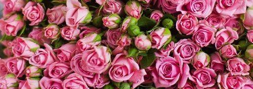 Роза Динара 2