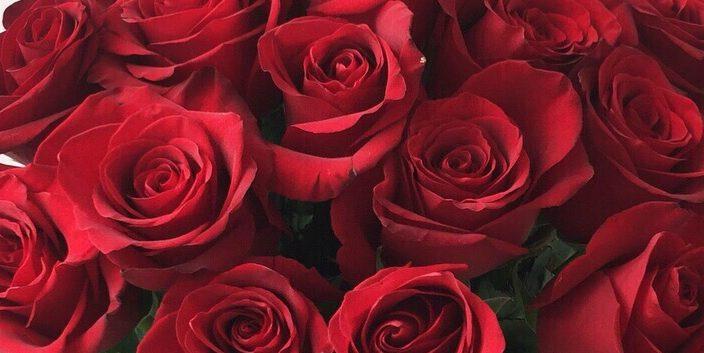 Роза Фридум Сиера 2