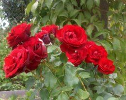 Роза Гранд Отель