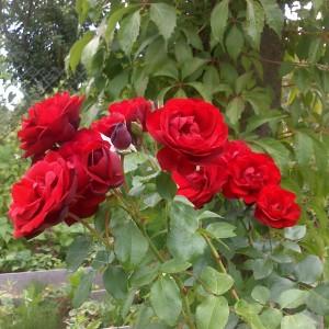 Роза Гранд Отель 1