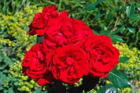 Роза Гранд Отель 4