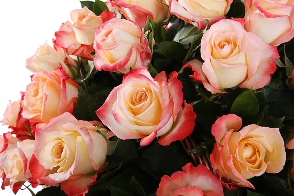 Роза Кабарет 3