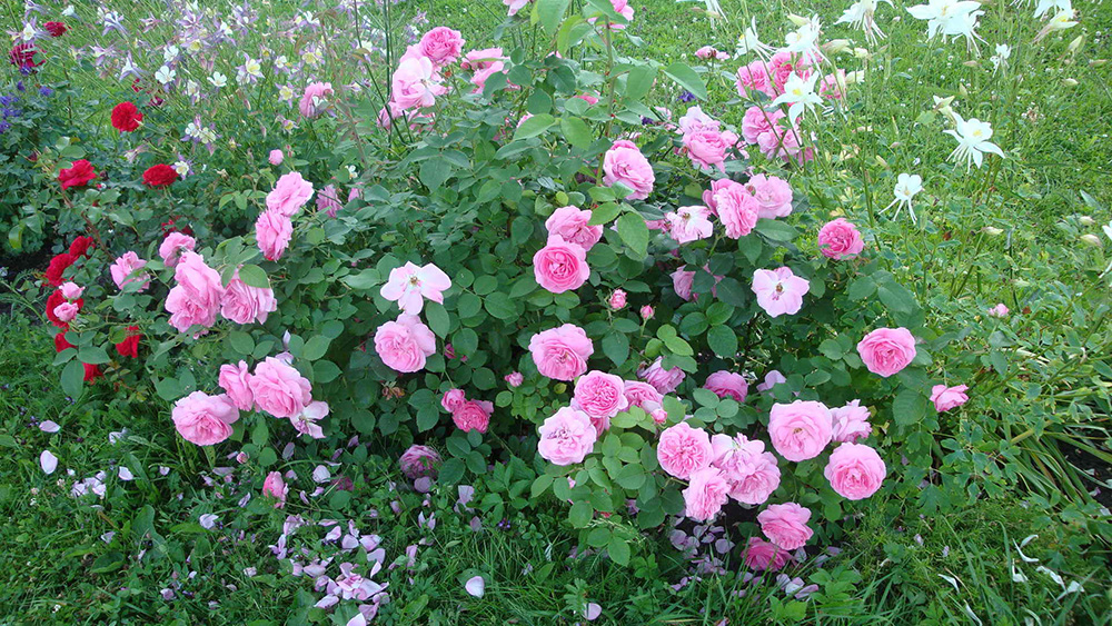 Роза Луис Одьер 2