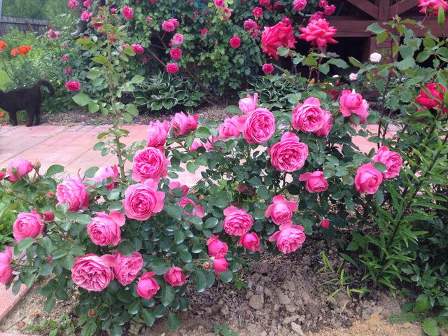 Роза Луис Одьер 3
