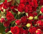 Роза Мирабель