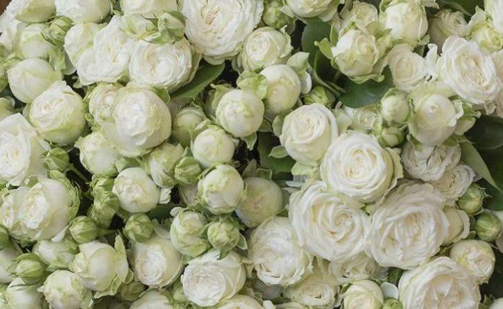Роза Мисс Бомбастик 1