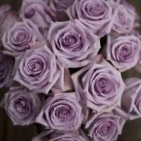 Роза Оушен Микадо 3