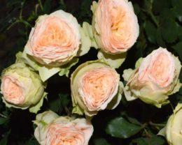 Роза Павлова