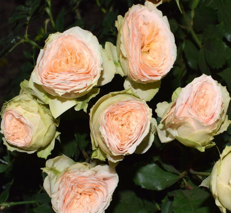 Роза Павлова 1
