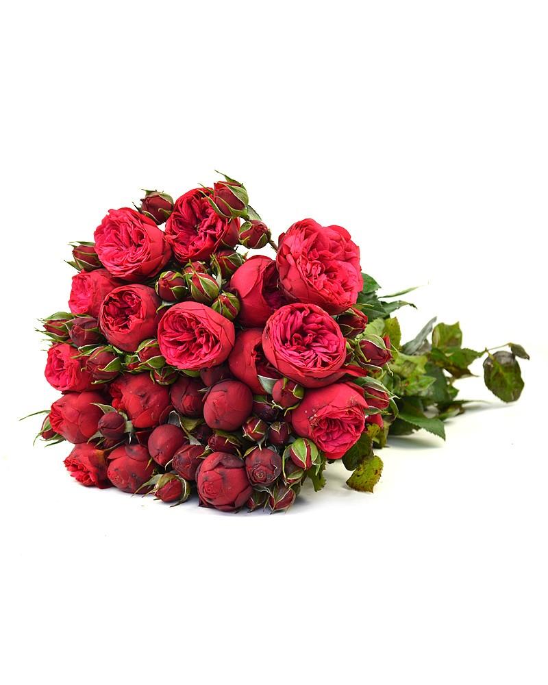 Роза Пиано Фрейланд изображение 2