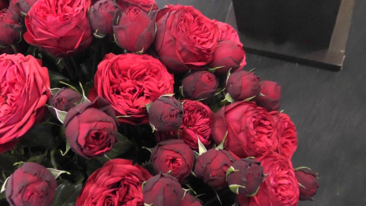 Роза Пиано Фрейланд изображение 4