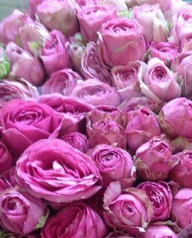 Роза Пинк Лейс 4