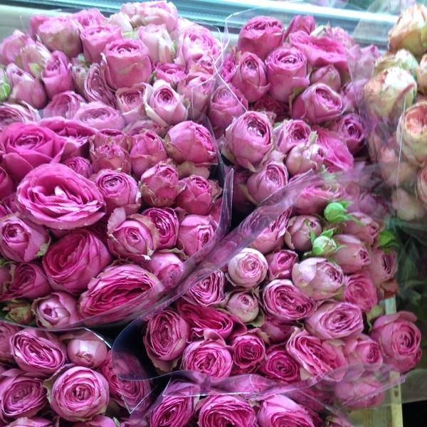 Роза Пинк Лейс изображение 4